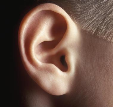 Backbeat Science: Unser Gehör – Teil I  Ohren